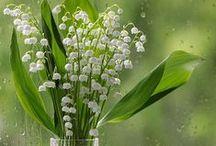 Blumen: Maiglöckchen / (Lily of the Valley)