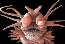 the Face of Monday / The many faces of Monday, Saturday morning and insects & microorganisms under a microscope.