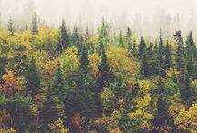 Nature & Wood