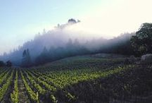 Destination Vineyards / Vineyards and wineries we'd love to visit!