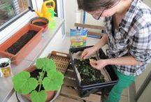 Žížalí kompost / O vermikompostování od samého začátku do (snad úspěšného) konce