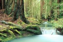 Redwoods / The other side of Fort Bragg, CA.  Nothing like the peace and quiet of the redwood forest.