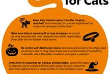 Cat Safety / Safety tips for cats.