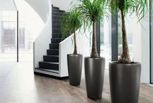 Plant Containers / Great examples of how plants can bring life to a beautifully designed space.