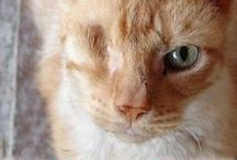 """Less Adoptable Cats are Awesome / Less-adoptable cats, sometimes called """"special needs cats"""" are less likely to find new homes quickly, but make wonderful, loving family members."""