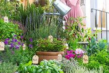 Kitchen Gardens - Inside and Out / Ideas for growing and preserving your own herbs
