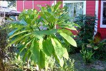 Garden Stuff / by Galvestons Red Victorian Retreats