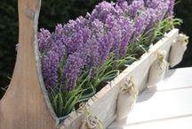 Tuin / Tips om je tuin leuker te maken