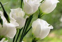 Decoreren met bloemen / Mooie bloemstukken die ik nog eens in huis of in de tuin wil hebben staan