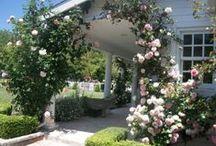mon jardin...