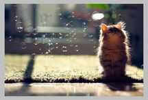 Kittens and cats / Please pin only adorable Pictures of KITTENS AND CATS!
