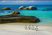 South African Beaches / With more than 3 000 km of coastline in South Africa, there is a beach for everyone, whether you want so swim, sunbathe, surf, fish or just simply walk. The water temperature along the coast varies widely, while the Atlantic Ocean on the west coastline always is refreshing, the Indian Ocean along the south and east coast warms up nicely in summer. Enjoy South Africa's amazing beaches!