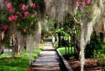 Charleston Gardens & Sights / Summers Corner is a quick 30 minute drive from Downtown, Charleston, with many unique gardens, historic plantations and places of interest in between.