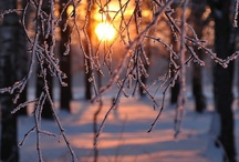 winter / by Annie Lammers Farrell