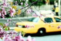 Big Yellow Taxi / I have always loved the NYC yellow taxi cabs... / by Clare O'Connor