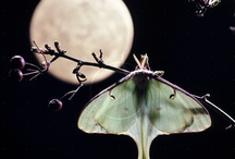 insects / by Moon Madness
