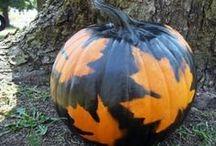 Halloween / by Amy Schepp