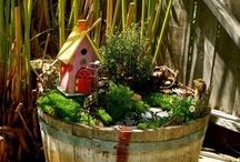 Fairy Gardens / Everything fairy garden