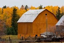 barns / by Annie Lammers Farrell
