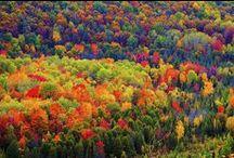 michigan autumn / by Annie Lammers Farrell