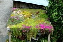 Bloomin' Beautiful / by Elisabeth Bond