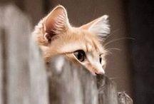 Kitty! / by Victoria Pruitt
