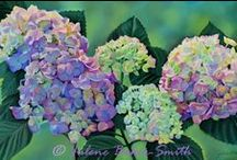 Hydrangea colors / love the colors of fresh or dried hydrangeas & rust as nostalgic beauty...  / by Donita Hellmann