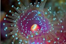 Undersea explosion of color and beauty / Amazing life and magic under the ocean.. / by Donita Hellmann