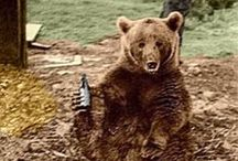Voytek bear