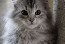 "Cat ""Lucy"""