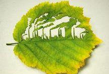 Cuidando nuestro planeta