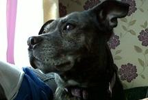 My Dog / Treacle Tart