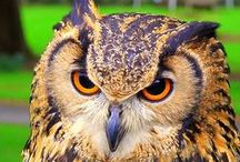 Owls / Owls in all their splendor and quirkiness