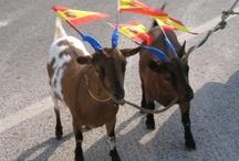 ESPAÑA - SPAIN / Las provincias ANDALUCIA-CASTILLA-LA MANCHA-VALENCIA Fotografia RR.
