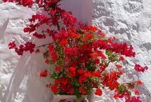 Patmos Colors / http://goo.gl/iea3ES