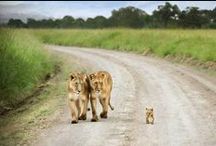 WILDLIFE FAMILY