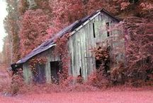 Sweet Home Alabama / by Elle J