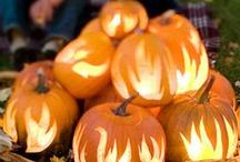 EVERYTHING PUMPKIN / The most wonderful pumpkin decorations for fall and Halloween.  I want my own pumpkin patch next year.
