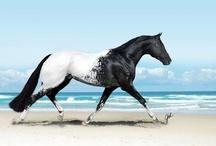 Horse around the clock