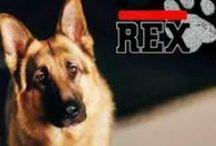 Rex / El tablero de la série del mejor perro policía