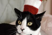 CATS in HaTs!! / Cats in Hats are so funny cute!  The whole CAT in the HAT Series by Dr. Seuess made me laugh as a child!  They were so fun to read over and over again! / by Frances Perkins