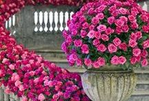 ROSES AND ORCHIDS / BEAUTIFUL FLOWERS