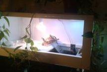 My little turtles / Turtle habitat, yellow belly slider