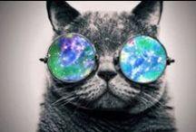 Mis Gafas / Sunglasses