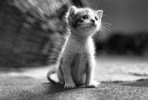 Lovable kittens