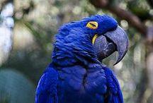 Animais amazônicos