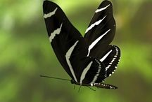 Delicate Wings / Thank you for visiting, and please feel free  to pin what ever you like.  / by Diane LeBaron