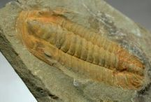 FOSSILS, ETC.... / Fossils & other ancient finds..