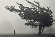 Nature in Monochrome / . / by Diane Stauffer