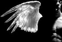 wings / Dragões, vampiros, arcanjos, seres que povoam a imaginação